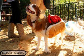 King charles hot dog